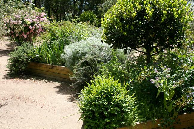 herb, garden, bay, rosemary, tree, raised bed