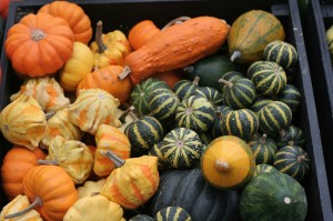 Pumpkins and gourds come in all shapes and sizes