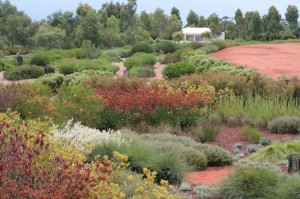 Part of The Australian Garden at the Botanic Gardens in Cranbourne Victoria