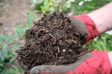 Add compost worms to worm farms