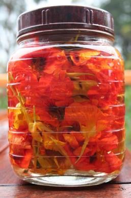 Bright orange, red and yellow nasturtium flowers
