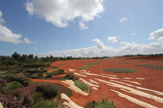 Red sand garden with Eucalypt gardens to the left