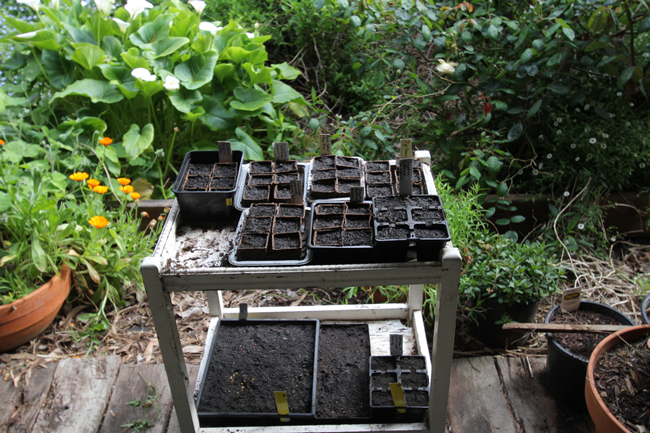 Seeds in coir and peat pots