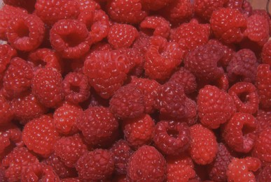 Delicious, succulent raspberries