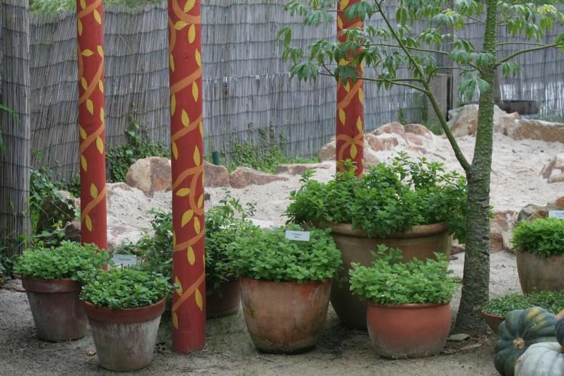 Mints grow well in pots
