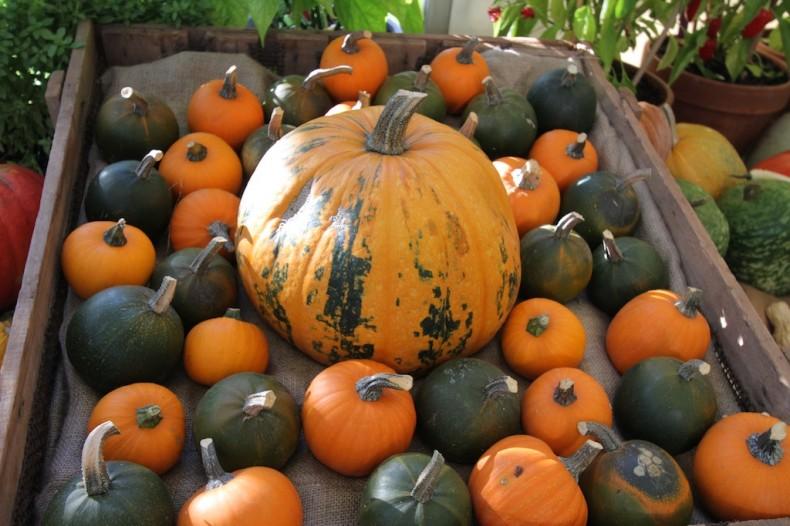 Diggers' pumpkins