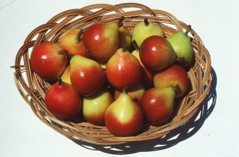 Miniature, delicious paradise pears