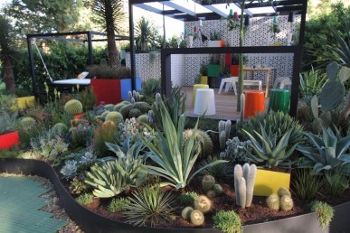 The delightful and very different succulent garden
