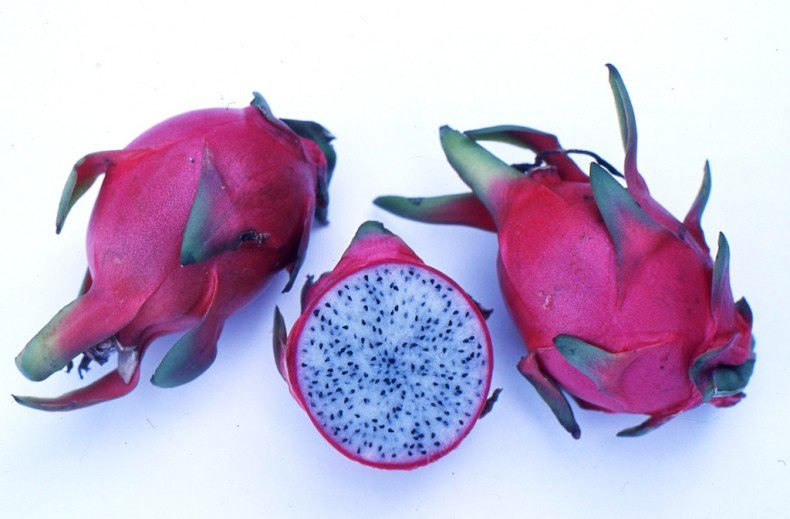 Exotic dragon fruit