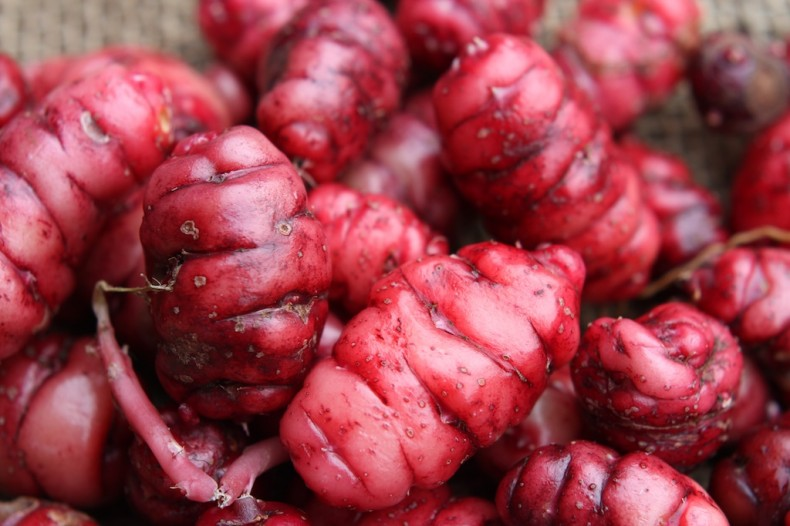 Knobbly red oca tubers