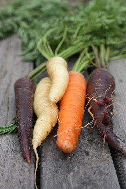Carrots come in a range of colours
