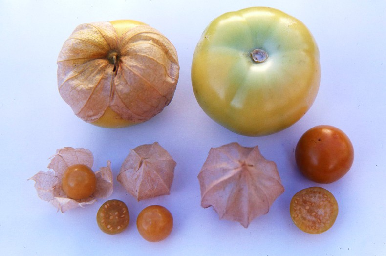 Unusual edible fruit
