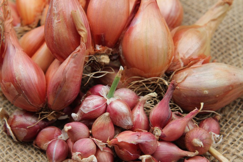 Tree onions are one of the easiest onions to grow