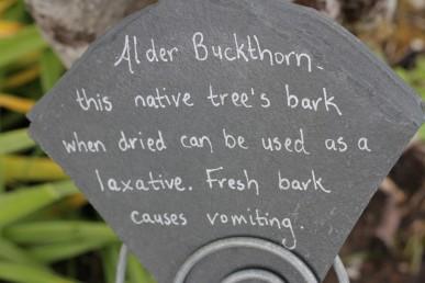 Alder buckthorn (1)