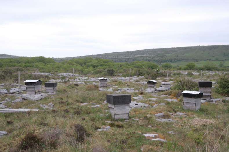 Bee hives in The Burren