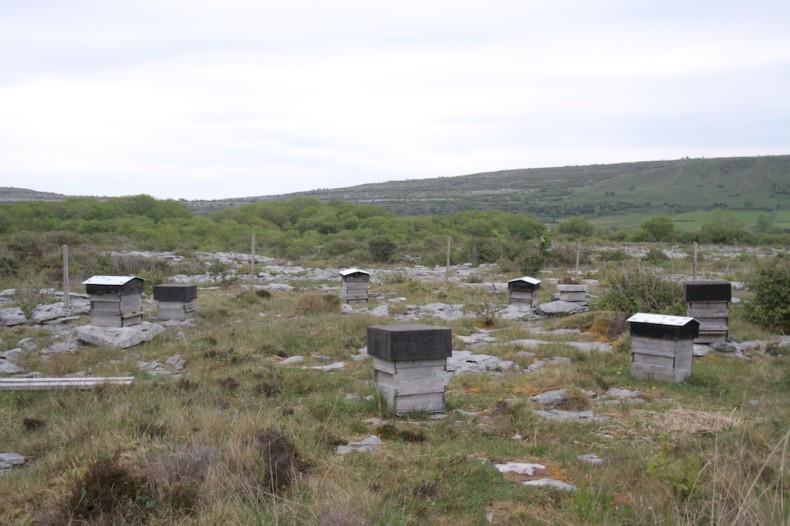 Bee hives in The Burren