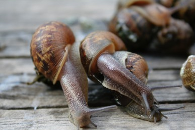 Snails and slugs cause a lot of damage in the garden.